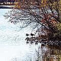 At The Lake-40 by David Fabian