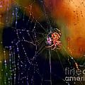 At The Spider Net by Viktor Birkus