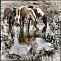 At The Watering Hole 1 by Wes and Dotty Weber