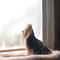 At The Window by Catia Lee