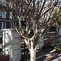 Atlanta Tree by Joseph Yarbrough