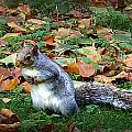 Attentive Squirrel by Gina Dsgn