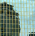 Auckland Reflection by Mark Llewellyn