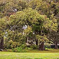 Audubon Park by Steve Harrington