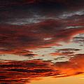 Audubon Sunset Light by Neal Eslinger