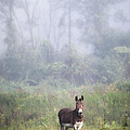 August Morning - Donkey In The Field. by Gary Heller