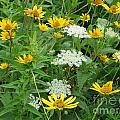 August Wildflowers by Kathie Chicoine