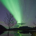 Auroras And Tree by Frank Olsen