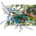 Australian King Parrot by Andrew McInnes