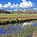 Australian Landscape by Anthony Dezenzio