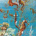 Australian Seahorses by Leonard Robert Brightwell