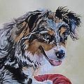 Australian Sheepdog by Brenda Kennerly
