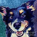 Australian Shepard Dog Portrait by Robyn Saunders