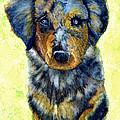 Australian Shepherd Puppy by Janine Riley