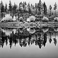 Autumn Reflection Black And White by Allan Van Gasbeck