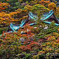 Autum In Japan by John Swartz
