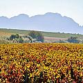 Autum Wine Field by Werner Lehmann