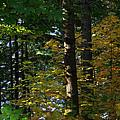 Autumn 10 by J D Owen
