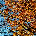 Autumn 2013 by Dragan Kudjerski