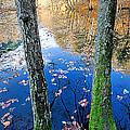 Autumn - 7 by Okan YILMAZ