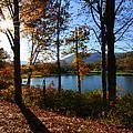 Autumn Afternoon by Anne Barkley