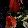 Autumn by Alfredo Martinez