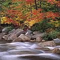 Autumn Along Swift River  by Tim Fitzharris