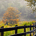 Autumn Along The Fence by Kerri Farley