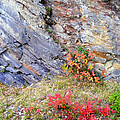Autumn And Rocks by Duane McCullough
