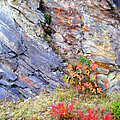 Autumn And Rocks Vertical by Duane McCullough