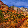 Autumn Arroyo by Greg Norrell