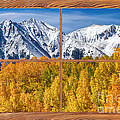 Autumn Aspen Tree Forest Barn Wood Picture Window Frame View by James BO  Insogna