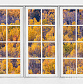 Autumn Aspen Trees White Picture Window View by James BO Insogna