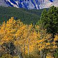 Autumn Aspens And Longs Peak by James BO Insogna