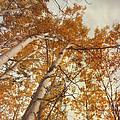 Autumn Aspens by Priska Wettstein
