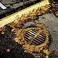 Autumn Asphalt by Roxy Hurtubise