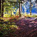 Autumn At Cary Lake by David Patterson