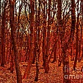 Autumn At Formby Woods  by Joan-Violet Stretch