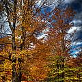 Autumn At Mc Cauley Mountain by David Patterson