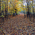 Autumn At Mono Cliffs by Rick Shea