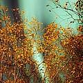 Autumn Aurora by David Broome