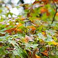 Autumn by Barbara Shallue