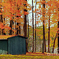 Autumn Barn by Catherine Balfe