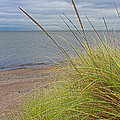 Autumn Beach Grasses by Barbara McMahon