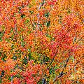 Autumn Outbeats Summer by Ihor Bodnar
