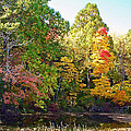 Autumn Beauty by Aimee L Maher ALM GALLERY