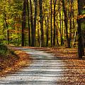 Autumn Beauty by Dale Kincaid