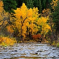 Autumn Beauty In Boise County by Ed  Riche