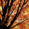 Autumn Beauty by Kim Hojnacki