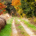 Autumn Beauty On Rural Dirt Road by Peggy Franz